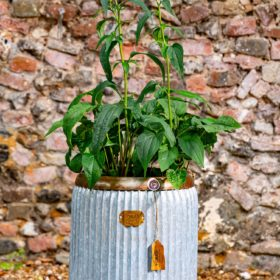 Wootton Vintage Metal Tub Planter