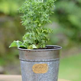 Croxton Vintage Pot – Set Of Three