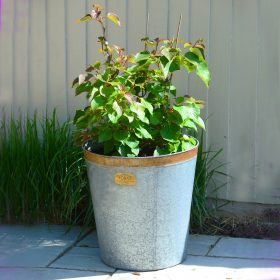 Keswick Vintage Zinc Planters – Set of Two
