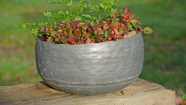 Burnham Vintage Planter