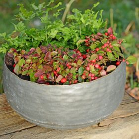 NEW Opus Aged Iron Planter (PRE-ORDER)
